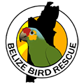 "Belize Bird Rescue is a not-for-profit organisation operating on a private reserve with the Cayo District of Belize. The creators began ""rescuing"" birds in April 2004 and as of mid 2009 have cared for 72 birds and made 40 successful releases."
