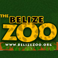 The Belize Zoo and Tropical Education Center was started in 1983, as a last ditch effort to provide a home for a collection of wild animals. The zoo keeps animals which were orphaned, born at the zoo, rehabilitated animals, or sent to The Belize Zoo as gifts from other zoological institutions.